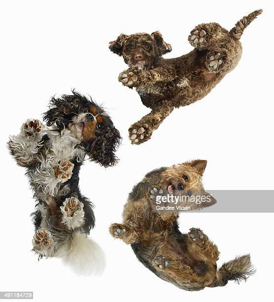 3 dogs looking down - paw stock pictures, royalty-free photos & images