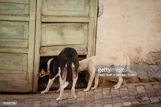 dogs looking through door - carvajal ストックフォトと画像