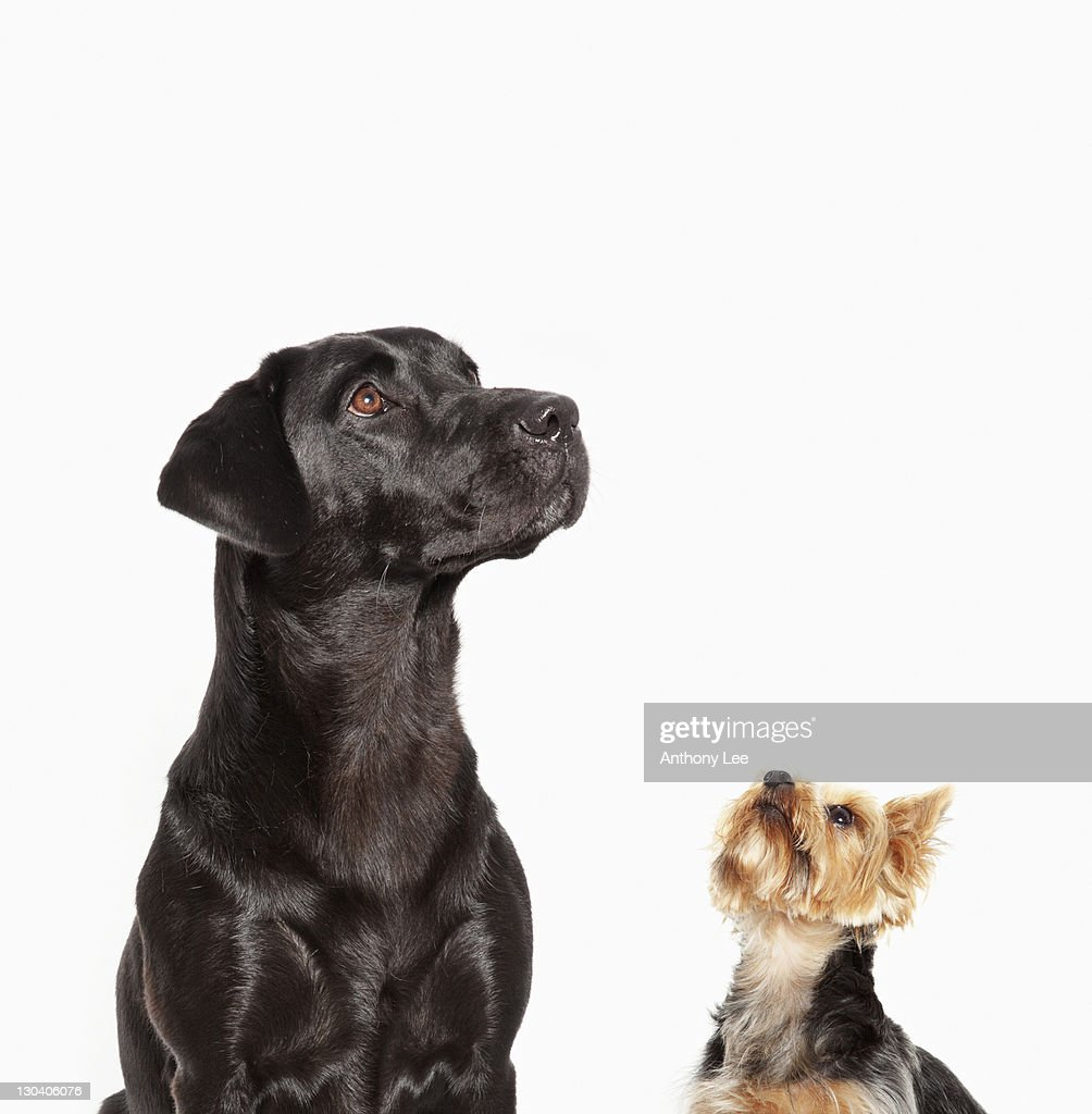 Dogs looking up : Stock Photo