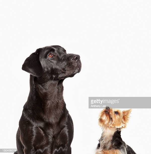 Dogs looking up