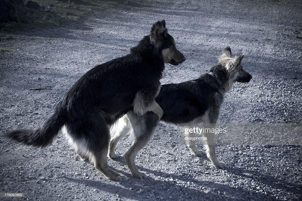 Dogs love : Stock Photo
