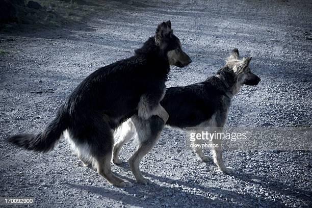 dogs love - english stockfoto's en -beelden