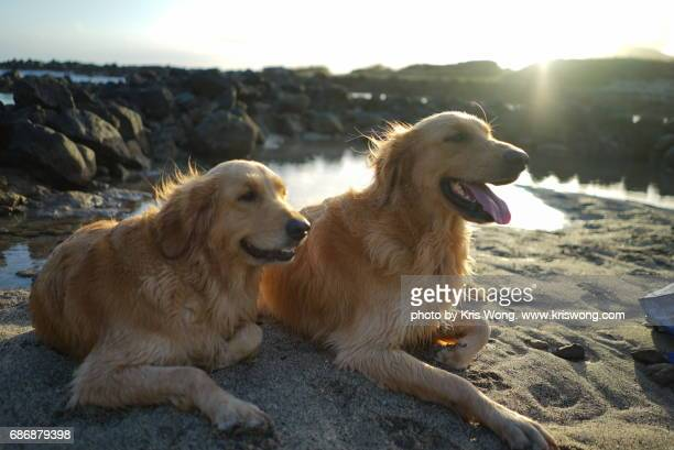 dogs lying down on the beach
