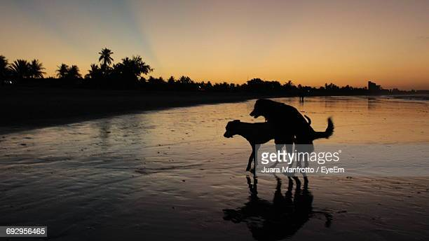Dogs Mating At Beach Against Sky During Sunset