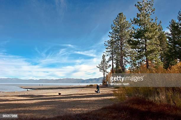 dogs near lake tahoe shore - サウスレイクタホ ストックフォトと画像