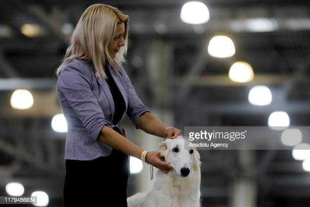 Dogs of different breeds participate in the International Dog Show Russia-2019 at Crocus Expo in Moscow, Russia on November 02, 2019. 10 thousand...