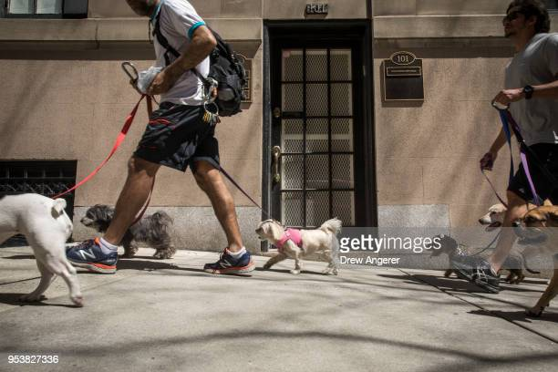 Dogs on a walk make their way past the office of Dr Harold Bornstein who was previously President Donald Trump's longtime personal physician May 2...