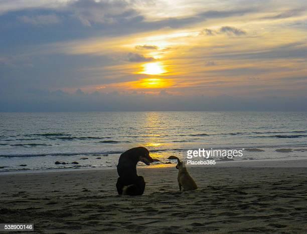 Perros en la playa al anochecer, Koh Lanta, Tailandia