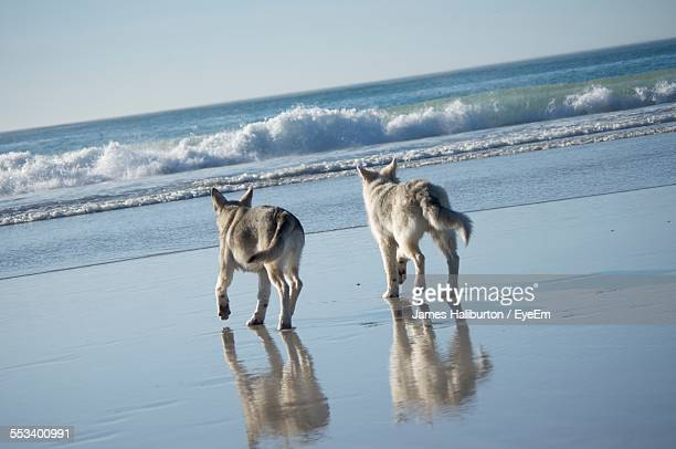 dogs on beach - constantia stock pictures, royalty-free photos & images