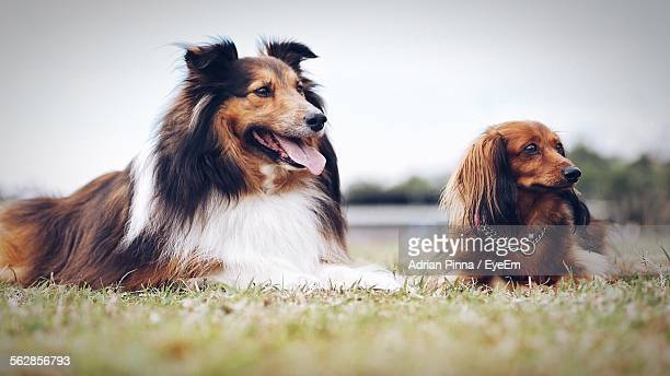 Dogs On Field Against Clear Sky