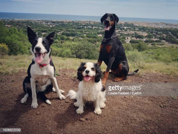 dogs on field - cap d'agde stock photos and pictures