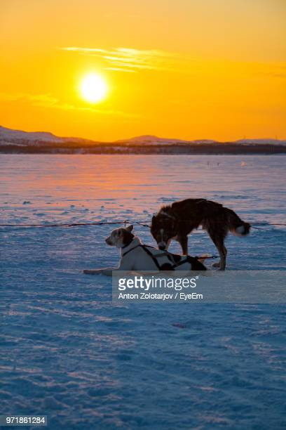 Dogs On Frozen Sea Against Sky During Sunset