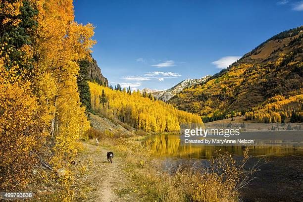 Dogs on Full Moon Trail by Ouray, Colorado