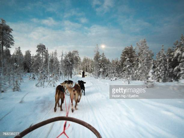 Dogs On Snow Covered Field Against Trees And Sky