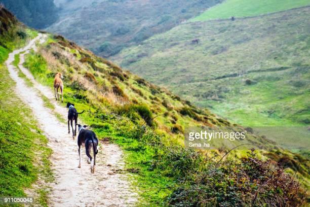 Perros en el camino en las montañas. Zumaia, España