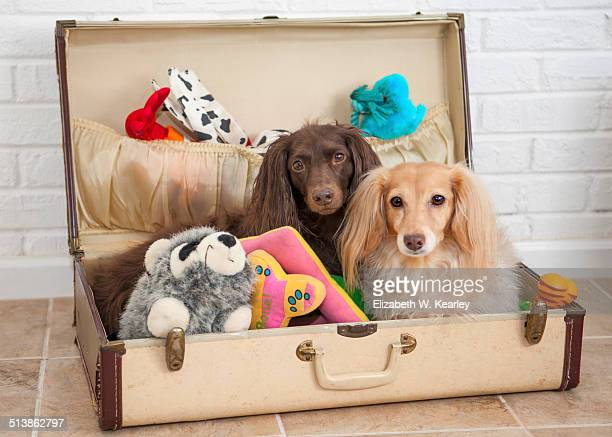 Dogs packed in suitcase