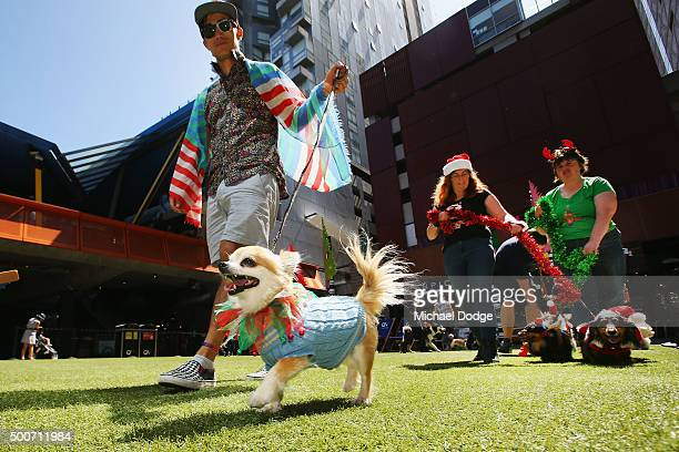 Dogs parade at QV Square during the Festive Best Dressed Dog Competition for The Lost Dogs' Home charity screening of 'Best in Show' on December 10...
