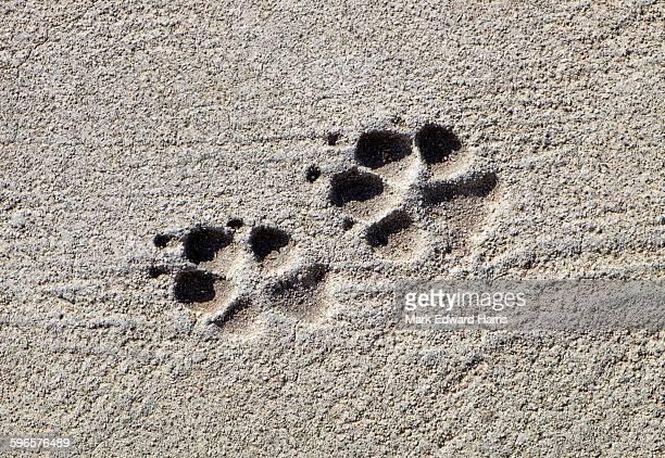 A dog's paw prints