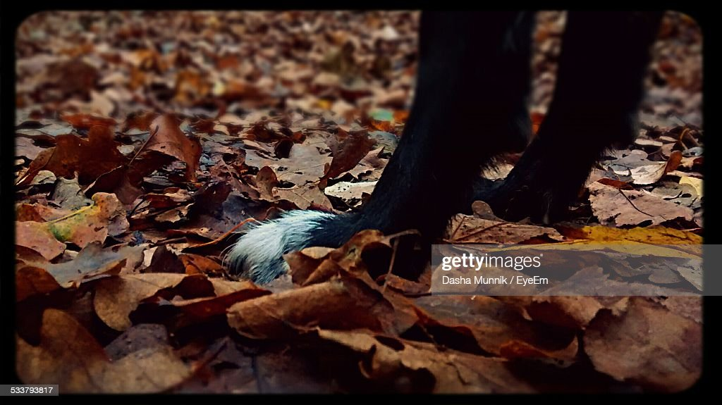 Dogs Paws In Leaves : Foto stock