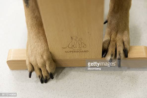 A dog's paws rest at the base of an acupuncture stand at the