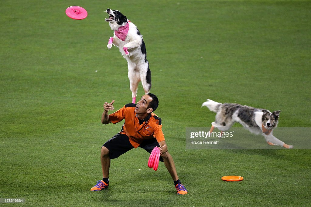Dogs perform during the Chevrolet Home Run Derby on July 15, 2013 at Citi Field in the Flushing neighborhood of the Queens borough of New York City.
