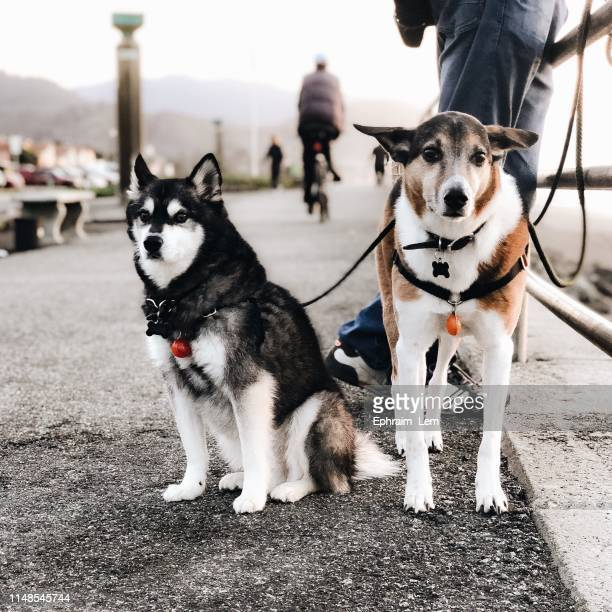 dogs - ephraim lem stock pictures, royalty-free photos & images