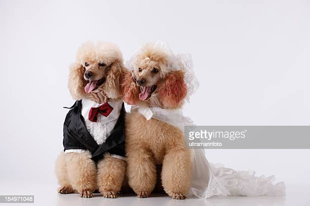 dogs - pampered pets stock pictures, royalty-free photos & images