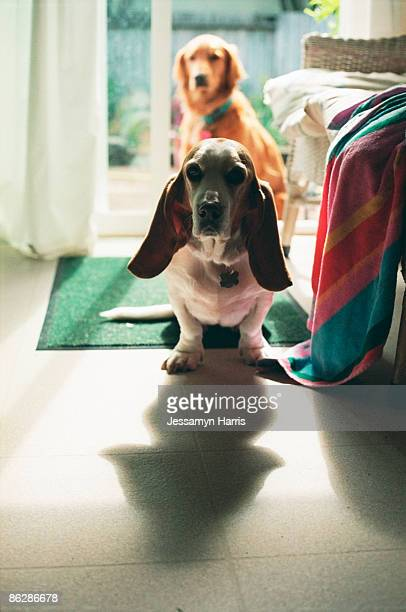 dogs - jessamyn harris stock pictures, royalty-free photos & images
