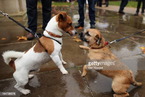 Dogs play the Westminster Dog of The Year competition in Victoria Tower Gardens on October 25 2012 in London England The annual competition was won...