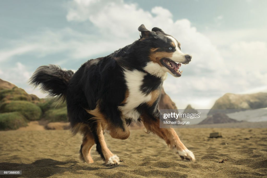 Dogs playing. : Stock Photo