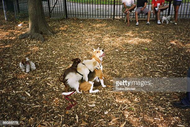 dogs playing - copulation of humans stock photos and pictures