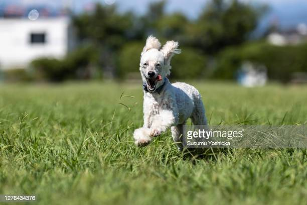 dogs playing with their owners in the park. - one animal stock pictures, royalty-free photos & images