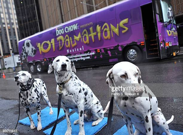 Dogs pose outside the 101 Dalmatian wrapped tour bus arrives at Madison Square Garden for 'The 101 Dalmations Musical' on November 12 2009 in New...