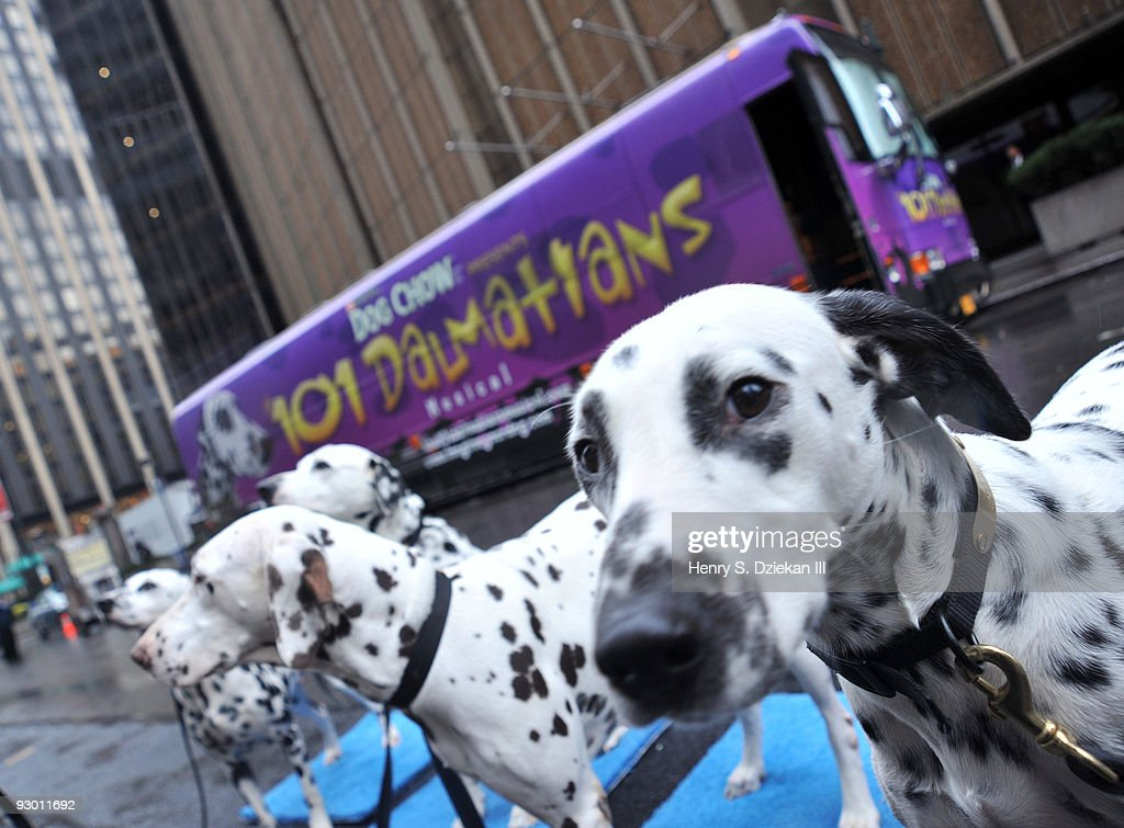 "Dalmatian Stars From ""The 101 Dalmatians Musical"" Arrive In NYC : News Photo"
