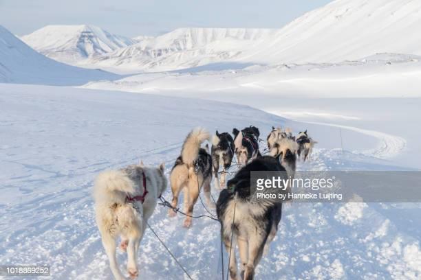 Dogs pulling a sled on a glacier near Longyearbyen, Svalbard
