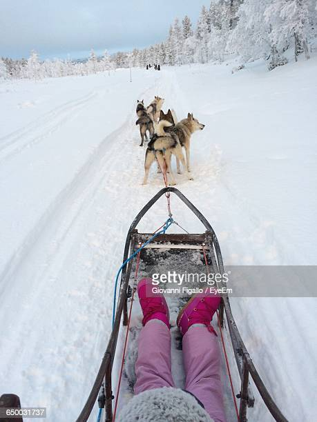 dogs pulling sled in snow - low section stock pictures, royalty-free photos & images