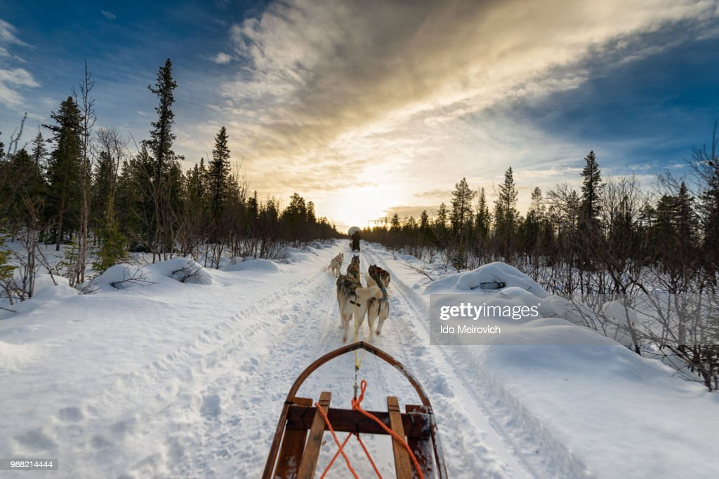 Dogs pulling sled in snow : Stock Photo