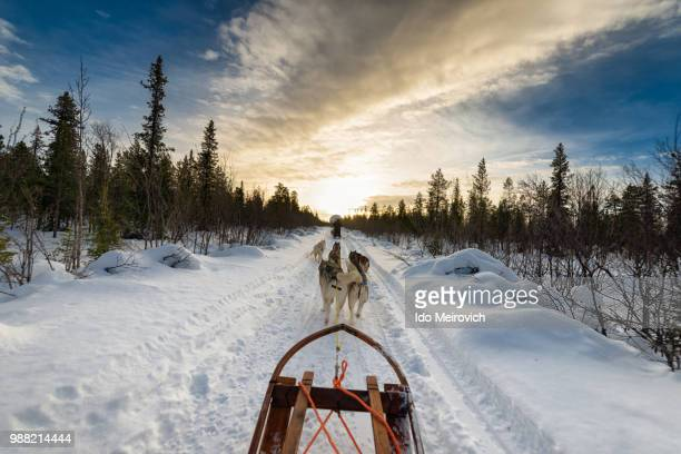 dogs pulling sled in snow - swedish lapland stock photos and pictures