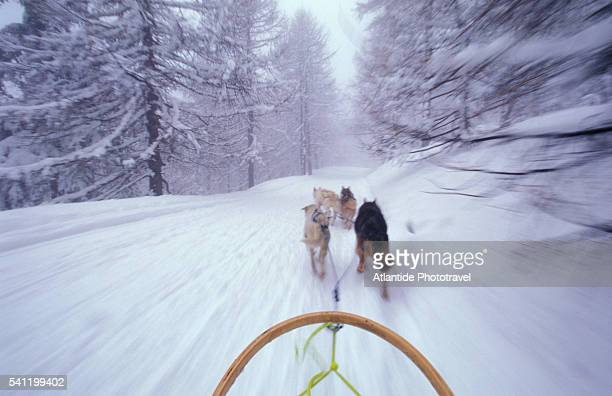 dogs pulling sled on colle s. carlo near courmayeur ski resort - クールマイヨール ストックフォトと画像