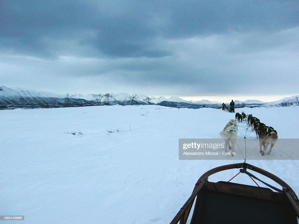 Dogs Pulling Sled On Snow Covered Field Against Cloudy Sky : Stock Photo