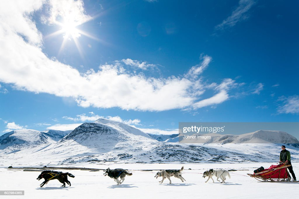 Dogs pulling sleigh : Stock Photo