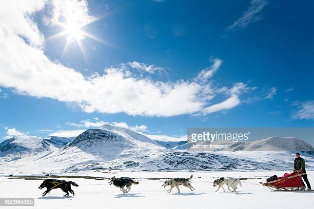 dogs pulling sleigh - swedish lapland stock-fotos und bilder