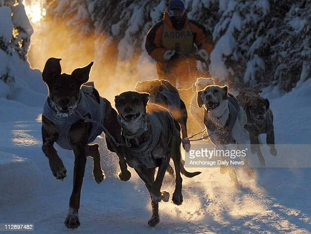 Dogs race around the track during the final day of the Doris and Orville Lake Memorial open class sled dog races at Tozier Track in Anchorage Alaska...