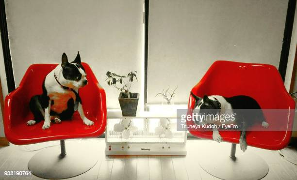 dogs relaxing on red chairs at home - dos animales fotografías e imágenes de stock