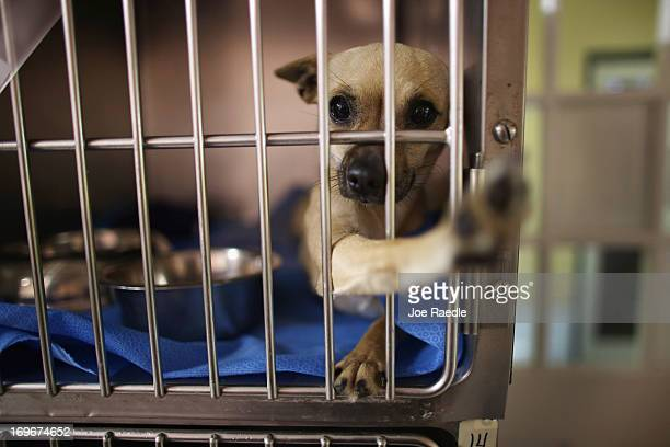 Dogs rescued from the ruins after a deadly tornado struck near Oklahoma City, Oklahoma are seen as they are cared for at the Tri County Humane...