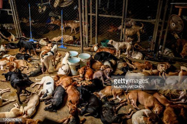 TOPSHOT Dogs rest in a crowded enclosure at Auntie Ju's shelter for stray dogs on the outskirts of Bangkok on April 6 where some 1500 canines rescued...