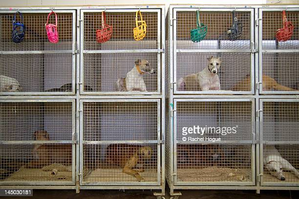 Dogs resting in crates