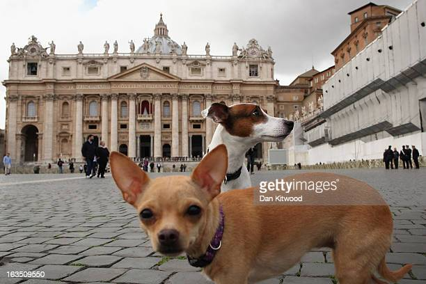 Dogs run around St Peter's Square on March 11 2013 in Vatican City Vatican Cardinals are set to enter the conclave to elect a successor to Pope...