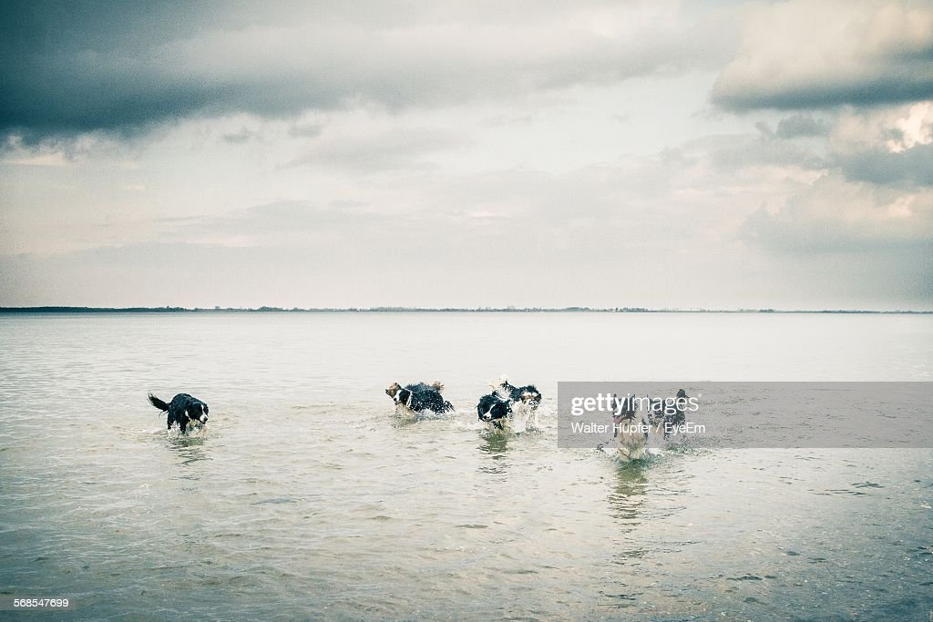 Dogs Running On Sea Shore Against Cloudy Sky : Stock Photo