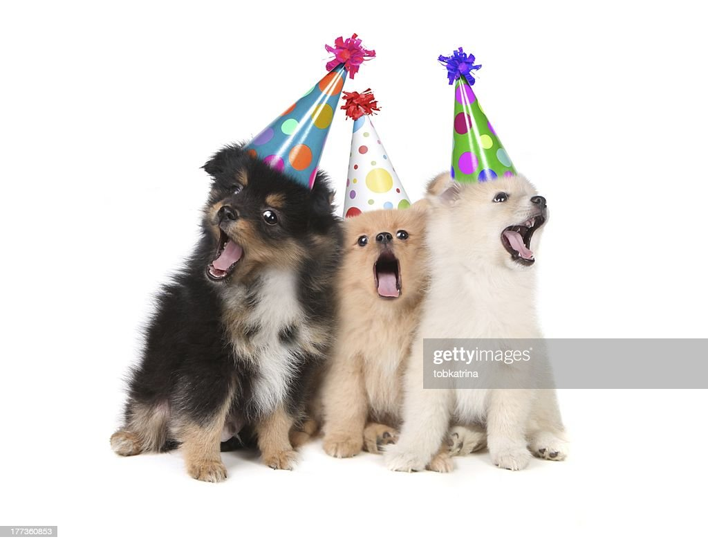 Dogs Singing Happy Birthday Wearing Party Hats Stock Photo